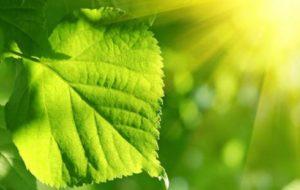 fotosinthesi